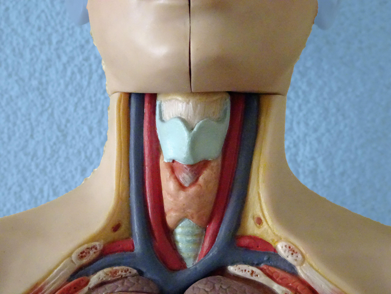 symptomen van slecht werkende lever