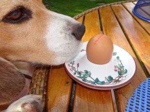 Rawfood nu ook voor honden