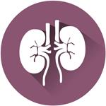 Bloedonderzoek nieren check