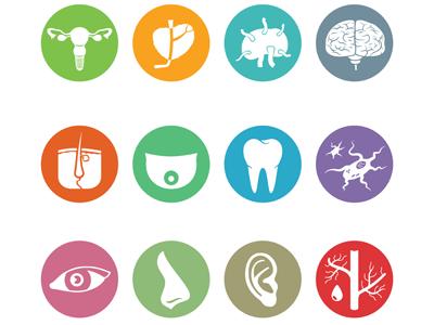 Voeding & Orgaansystemen
