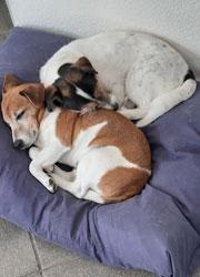 Ontwormen van hond of kat
