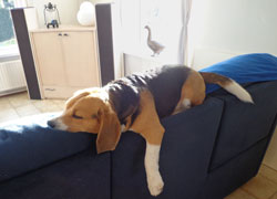 Hoe slaapt jouw hond?