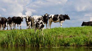 Rauwe melk: gezonder dan gedacht
