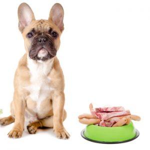Dierendag: let op pijn bij honden